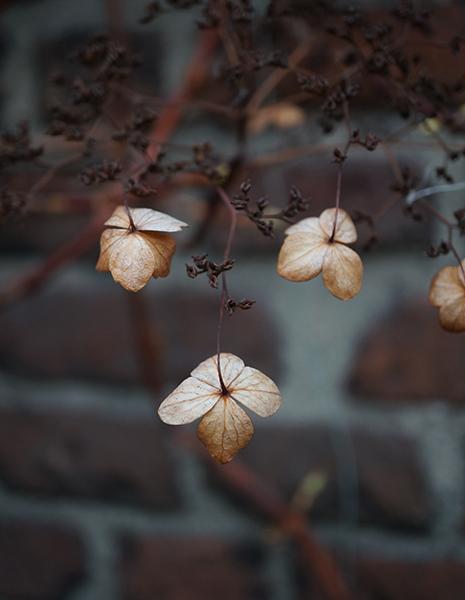 bloemetjes, muur, bruin, lange nieuwstraat, utrecht