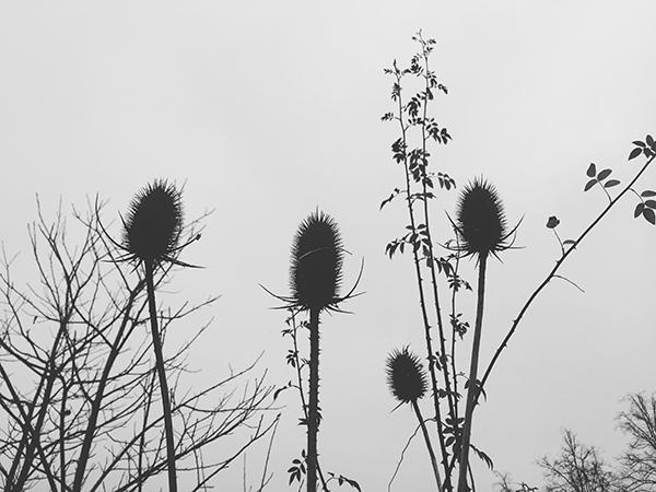smartphonefotografie, grijs, zwart-wit, fotografie, smartphone, iphone, distels, grauw, winter, lucht