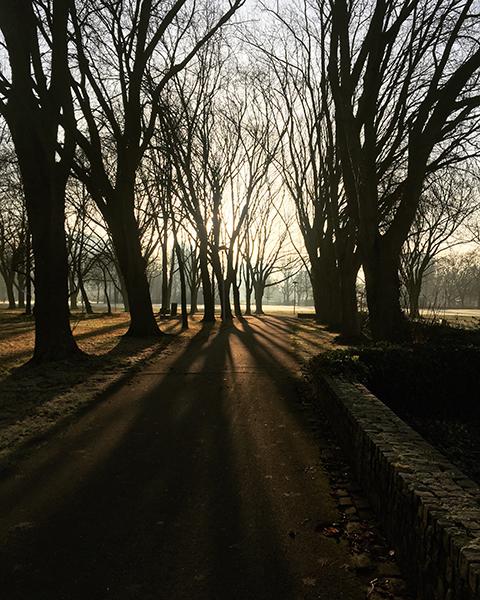 zon, schaduw, lijnen, bomen, park, smartphone, iphone, fotografie, winter