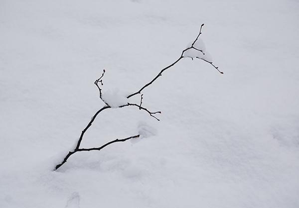 takje, tak, sneeuw, winter, park, wit