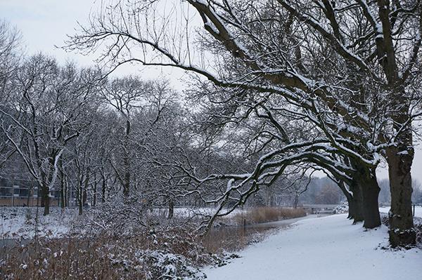 park, utrecht, transwijk, kanaleneiland, bomen, sneeuw, winter, wit