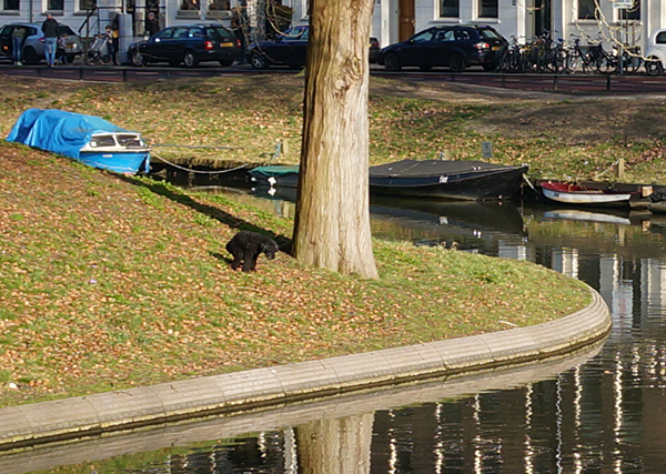 hond, poepen, utrecht, singel, gracht, boten