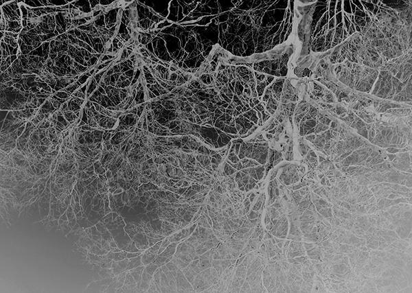 bomen, takken, water, weerspiegeling, negatief, zwart-wit, zwartwit