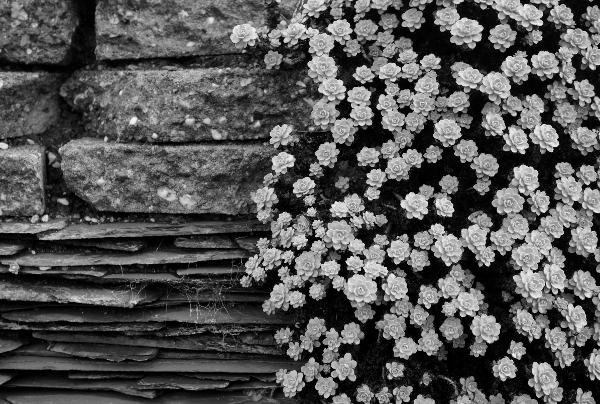 vlakken, zwart-wit, lijnen, plantjes, vetplanten, rotstuin, muur, botanische tuinen, utrecht