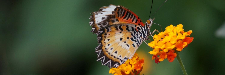 vlinderfestival, tropische vlinders, vlinders fotograferen, botanische tuinen utrecht