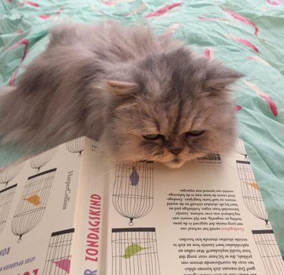 In bed met Pleuntje mijn kat Zondagskind van Judith Visser lezen