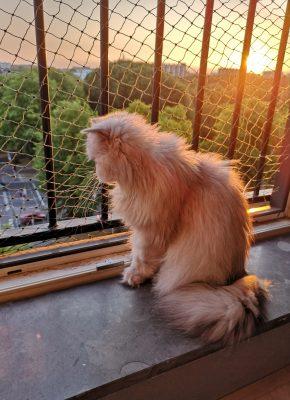 Pleuntje zit in de vensterbank met op de achtergrond de zonsondergang.